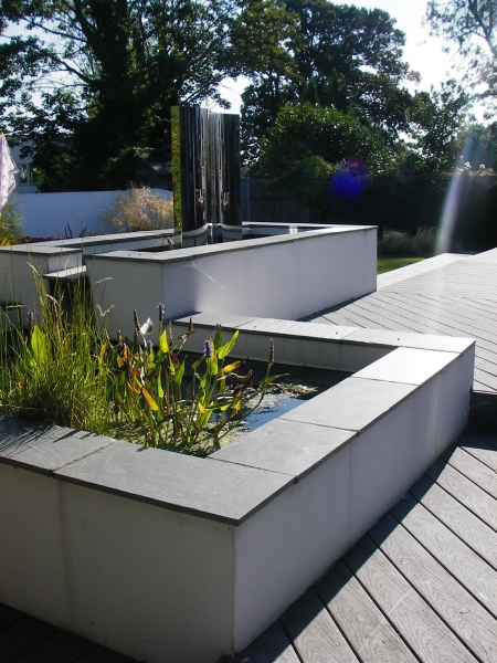 Contemporary water feature plants (5)