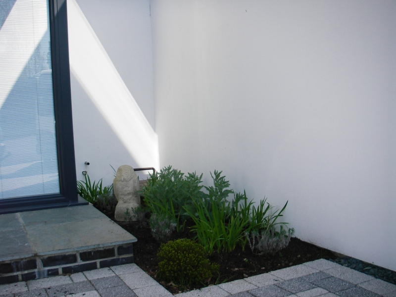 Contemporary front garden (8)