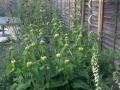 15 Planting design