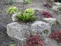 Rockery gardens (8)