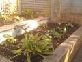 9 Small garden shady planting