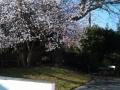 Contemporary front garden (3)