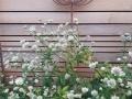 10 Garden cedar panel and seed head sculptures