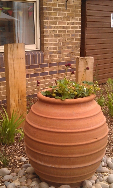 St Marks Hospital physiotherapy garden (11)
